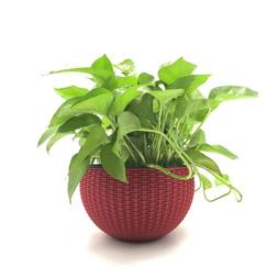 Round Wicker Basket Plant Pot Wash Willow Lined Flower Plant